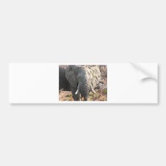 Elephant Pop Art Bumper Sticker