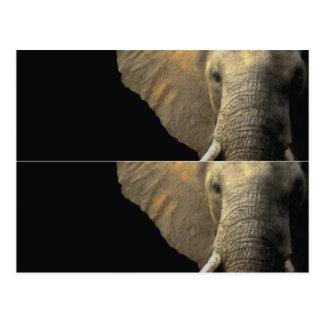 Elephant Portrait book marker Postcard