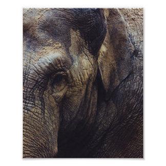 Elephant Portrait Photo Print
