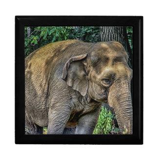 Elephant Portrait Wildlife Photo Trinket Boxes