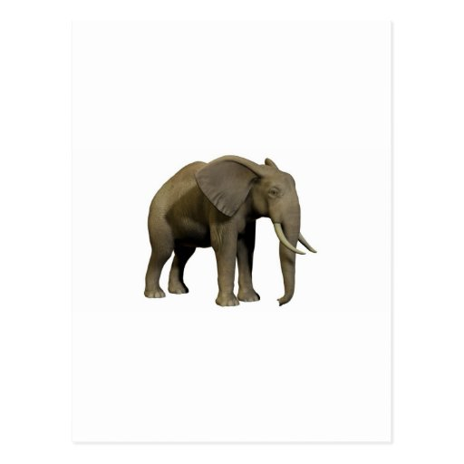 elephant post cards