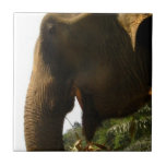 Elephant Profile Ceramic Tiles