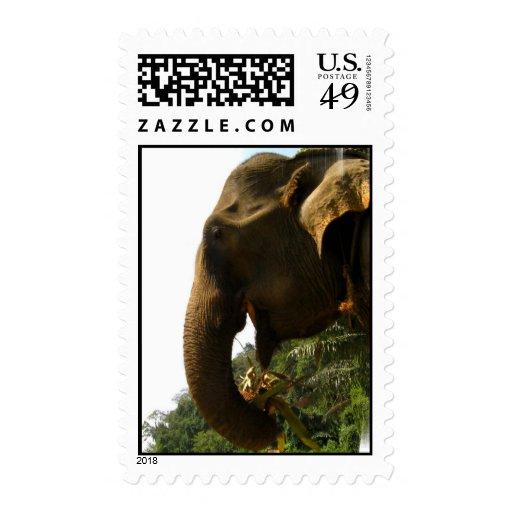 Elephant Profile Postage Stamp