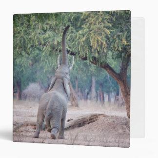 Elephant reaching for Acacia tree Binder