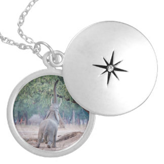 Elephant reaching for Acacia tree Locket Necklace