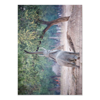 Elephant reaching for Acacia tree Magnetic Card