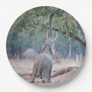 Elephant reaching for Acacia tree Paper Plate