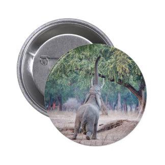 Elephant reaching for Acacia tree Pinback Button
