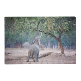 Elephant reaching for Acacia tree Placemat