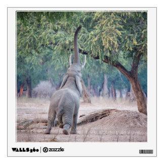 Elephant reaching for Acacia tree Wall Sticker