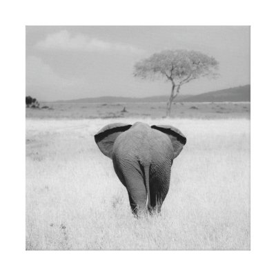 Elephant, rear view Wrapped Canvas Canvas Prints