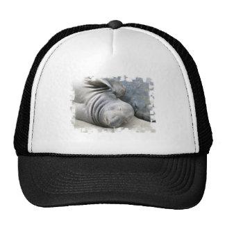 Elephant Seal Baseball Hat