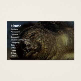 Elephant Seal Business Card