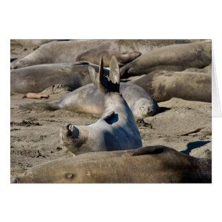 Elephant Seal Card