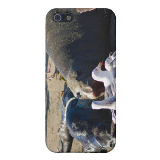 Elephant Seal Case For iPhone SE/5/5s
