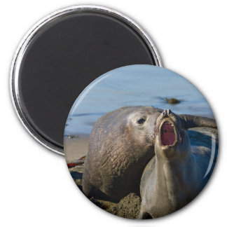 Elephant Seal Matting Magnet