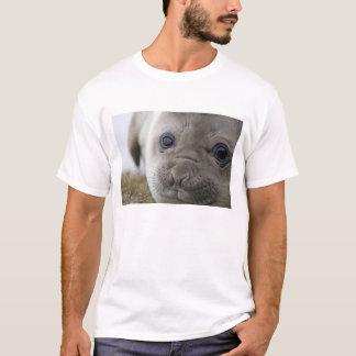 Elephant seal Mirounga leonina) cub in the T-Shirt