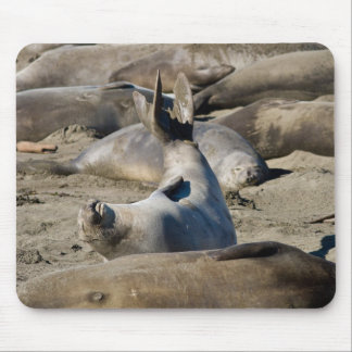 Elephant Seal Mouse Pad