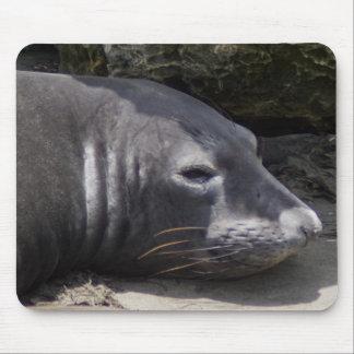 Elephant seal mousepad