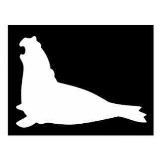 Elephant Seal Postcard Whiteblack