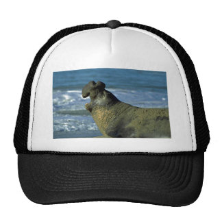 Elephant Seal Roaring On Beach Mesh Hat