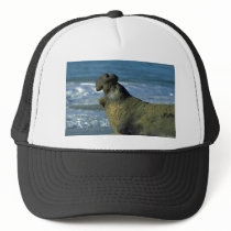 Elephant Seal Roaring On Beach Trucker Hat