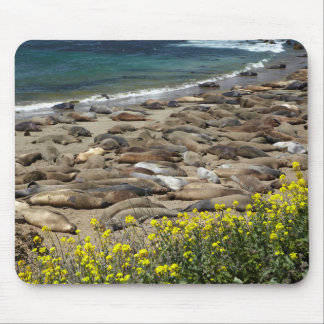Elephant Seal Rookery Mouse Pad