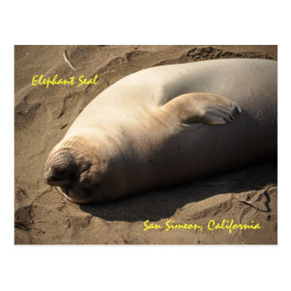 Elephant Seal San Simeon, California Postcard