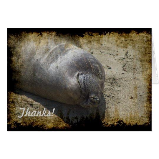 Elephant Seal Thank You Card