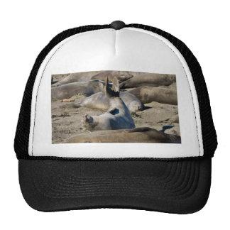 Elephant Seal Trucker Hat