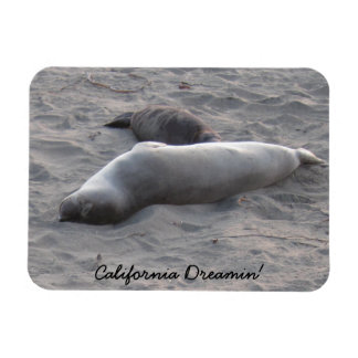 Elephant Seals at Piedras Blancos Beach Magnet