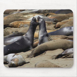 Elephant Seals Fighting Mouse Pad
