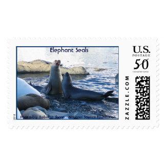 Elephant Seals Postage