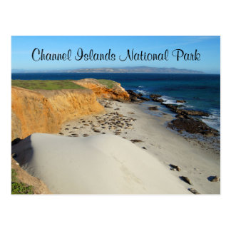 Elephant Seals, San Miguel Island, Channel Islands Postcard