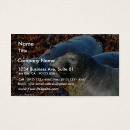 Elephant Seals Seaweed Business Card
