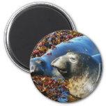 Elephant Seals Seaweed Fridge Magnet