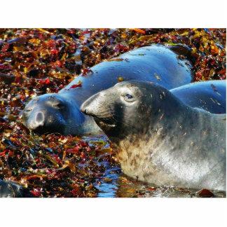 Elephant Seals Seaweed Photo Cut Outs