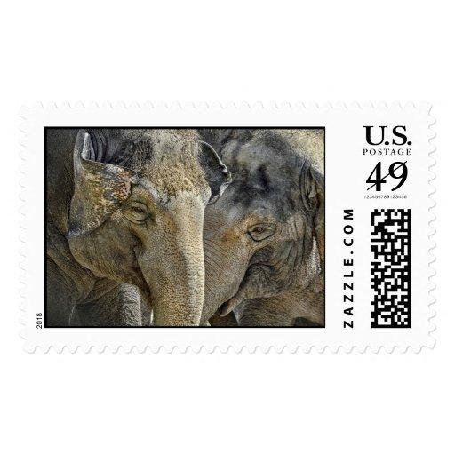 Elephant Sisters Postage Stamp