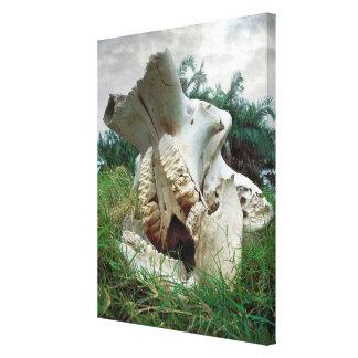 Elephant Skull Canvas Print