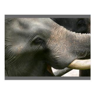 Elephant Smile Photo in Thailand Postcard