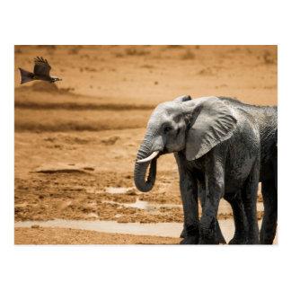 Elephant standing and eagle flying Botswana Postcard