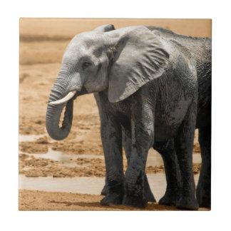 Elephant standing and eagle flying Botswana Tile