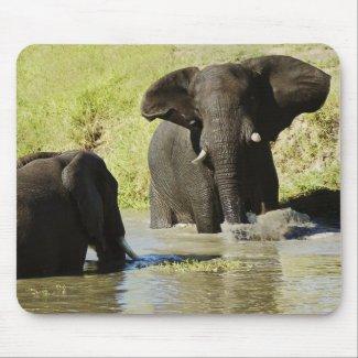 Elephant swimming (african elephant) mousepads mousepad