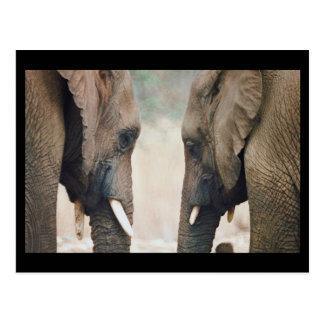 Elephant Symmetry Postcard