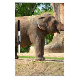 Elephant taking a Dust Bath Dry Erase Board