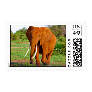 Elephant Themed, An Elephant With Long Tusks Walki Stamp