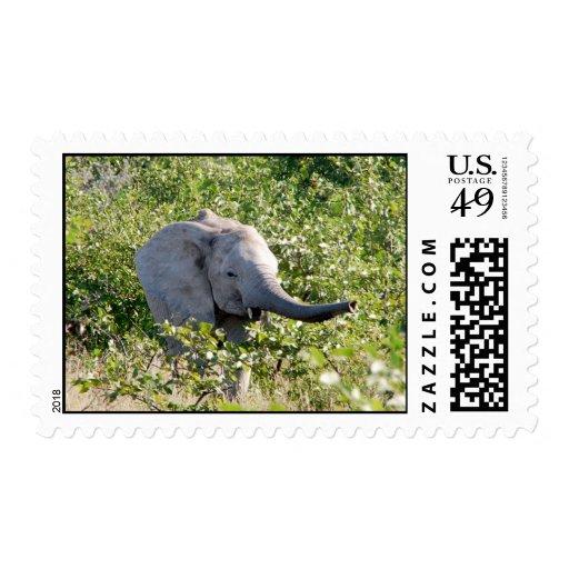 Elephant Trail Postage Stamp