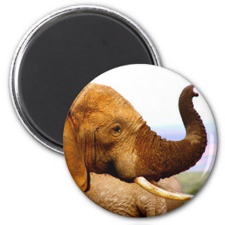 Elephant Trunk 2 Inch Round Magnet