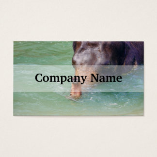 Elephant Trunk Up In Water, Animal Photography Business Card