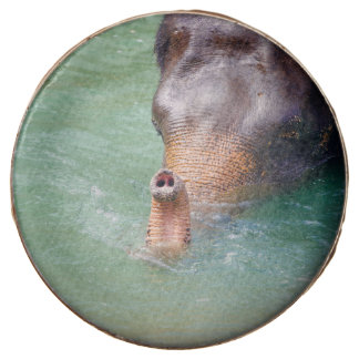 Elephant Trunk Up In Water, Animal Photography Chocolate Covered Oreo